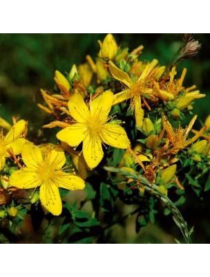 https://www.louis-herboristerie.com/10068-home_default/millepertuis-bio-suspension-integrale-de-plante-fraiche-sipf-100-ml-synergia.jpg