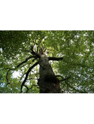 https://www.louis-herboristerie.com/10227-home_default/chne-bourgeon-bio-15-ml-herbalgem.jpg