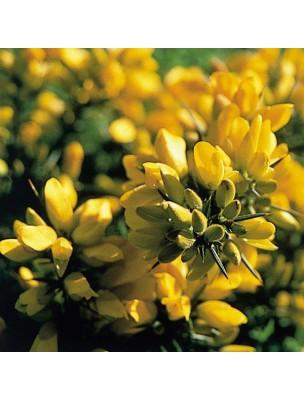 https://www.louis-herboristerie.com/10240-home_default/gorse-ajonc-20-ml-n13-fleurs-de-bach-original.jpg