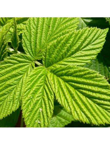 Framboisier Bio - Feuilles coupées 100g - Tisane de Rubus idaeus L.