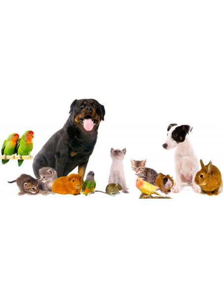 Animalyon Articulations & Os - Souplesse et capital osseux chez les animaux 500 ml - Catalyons