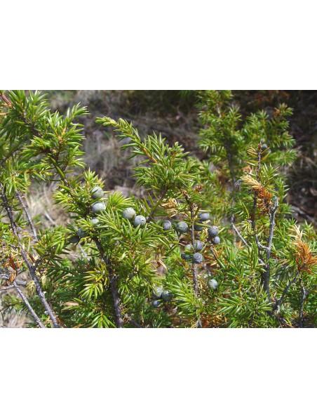 Genévrier Bio - Teinture-mère 50 ml - Herbiolys