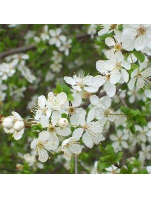 https://www.louis-herboristerie.com/10489-home_default/aubpine-bio-glules-purasana.jpg