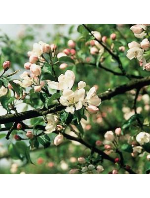 https://www.louis-herboristerie.com/10524-home_default/crab-apple-pommier-20-ml-n-10-fleurs-de-bach-original.jpg
