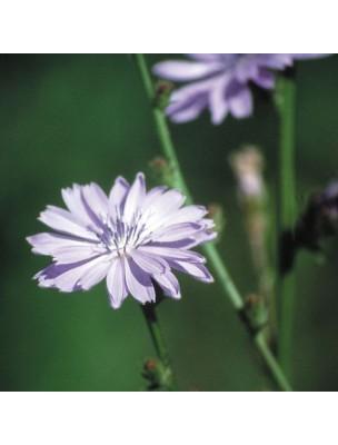 https://www.louis-herboristerie.com/10526-home_default/chicory-chicore-20-ml-n-8-fleurs-de-bach-original.jpg