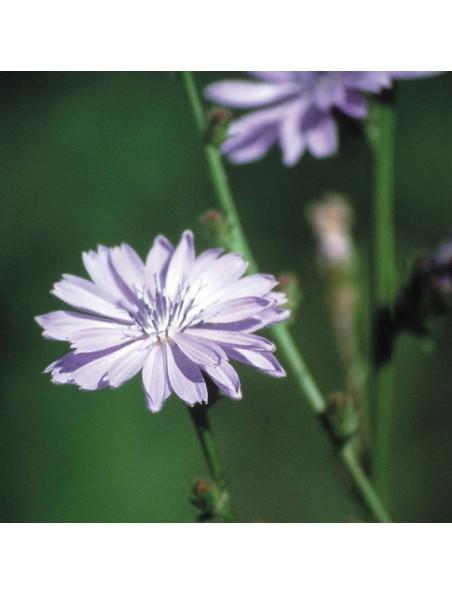 Chicory (Chicorée) N° 8 - Amour possessif 20 ml - Fleurs de Bach Original