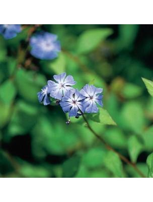 https://www.louis-herboristerie.com/10529-home_default/cerato-plumbago-20-ml-n5-fleurs-de-bach-original.jpg