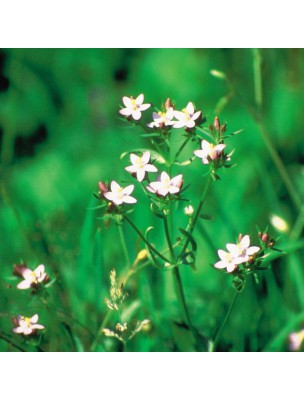 https://www.louis-herboristerie.com/10530-home_default/centaury-centaure-20-ml-n4-fleurs-de-bach-original.jpg