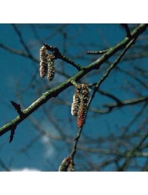 https://www.louis-herboristerie.com/10532-home_default/aspen-tremble-20-ml-n2-fleurs-de-bach-original.jpg