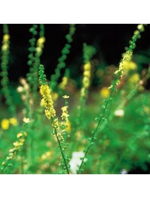 https://www.louis-herboristerie.com/10533-home_default/agrimony-aigremoine-20-ml-n1-fleurs-de-bach-original.jpg