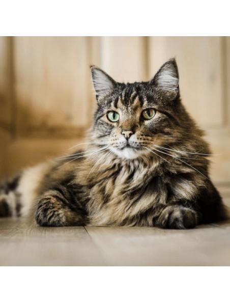 Kitty Mew'n - Soutien du système immunitaire des chats 50 ml - Hilton Herbs