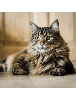 https://www.louis-herboristerie.com/10590-home_default/kitty-senior-soutien-des-fonctions-deficientes-chez-le-chat-age-50-ml-hilton-herbs.jpg
