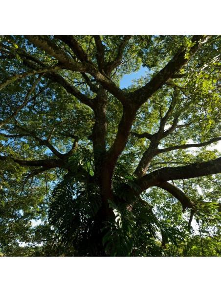 Baume de Copaïba Bio - Peau et agressions extérieures 50ml - Guayapi