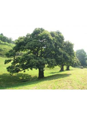 https://www.louis-herboristerie.com/10809-home_default/chtaignier-bourgeon-bio-15-ml-herbalgem.jpg