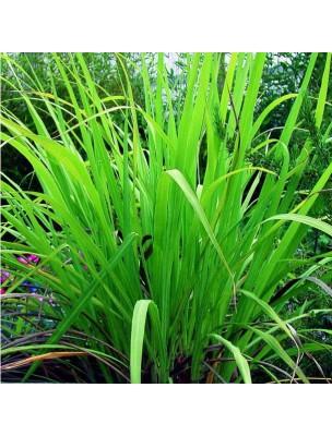 https://www.louis-herboristerie.com/10850-home_default/palmarosa-bio-huile-essentielle-pranarm-10-ml.jpg