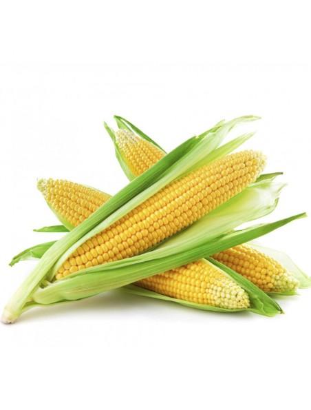 Maïs Bio - Stigmates (Barbe de maïs) 100g - Tisane de Zea mays L.