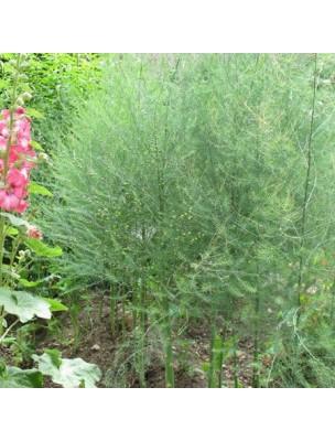 https://www.louis-herboristerie.com/10942-home_default/asperge-bio-teinture-mere-50-ml-herbiolys.jpg