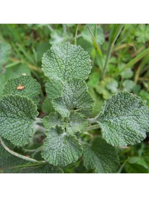 https://www.louis-herboristerie.com/10955-home_default/marrube-blanc-bio-voies-respiratoires-teinture-mere-marrubium-vulgare-50-ml-herbiolys.jpg