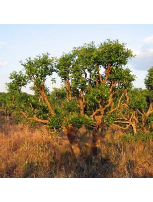 https://www.louis-herboristerie.com/11058-home_default/mate-bio-feuilles-100g-tisane-ilex-paraguariensis.jpg