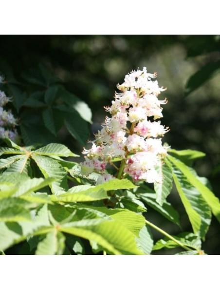 Marronnier bourgeon Bio - Système veineux 15 ml - Herbalgem