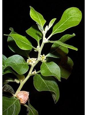 https://www.louis-herboristerie.com/11142-home_default/ashwagandha-5000-ginseng-indien-bio-detente-et-equilibre-mental-60-gelules-be-life.jpg