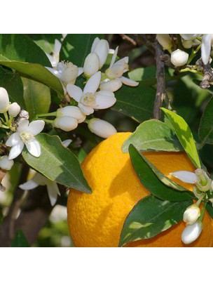 https://www.louis-herboristerie.com/11187-home_default/hydrolat-fleur-d-oranger-200-ml-naturado.jpg