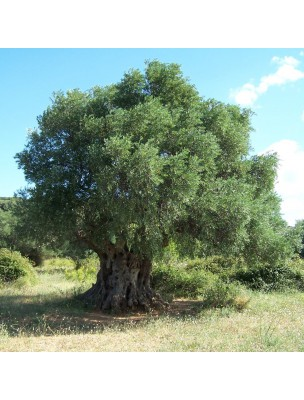 https://www.louis-herboristerie.com/11237-home_default/olivier-bourgeon-bio-50-ml-circulation-memoire-herbalgem.jpg