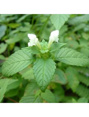 https://www.louis-herboristerie.com/11291-home_default/lamier-blanc-bio-teinture-mere-50-ml-herbiolys.jpg