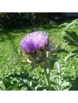 https://www.louis-herboristerie.com/11294-home_default/artichaut-bio-glules-purasana.jpg