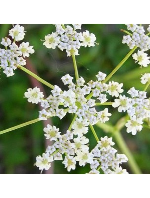 https://www.louis-herboristerie.com/11355-home_default/cumin-huile-essentielle-cuminum-cyminum-5-ml-pranarom.jpg