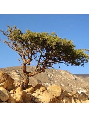 https://www.louis-herboristerie.com/11397-home_default/myrrhe-huile-essentielle-de-commiphora-molmol-5-ml-pranarom.jpg