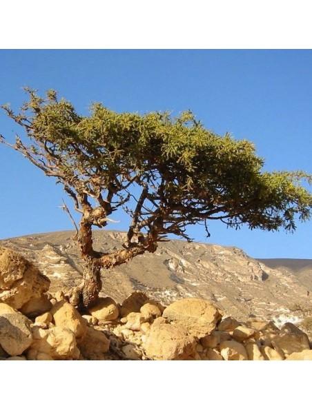 Myrrhe - Huile essentielle de Commiphora molmol 5 ml - Pranarôm