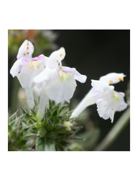 Galeopsis douteux Bio - Ménopause & Ostéoporose Teinture-mère Galeopsis dubia 50 ml - Herbiolys