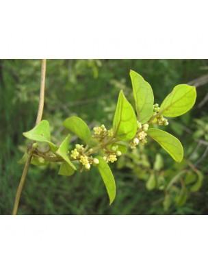 https://www.louis-herboristerie.com/12125-home_default/gymnema-sylvestre-feuille-coupee-100g-tisane-de-gymnema-sylvestris.jpg
