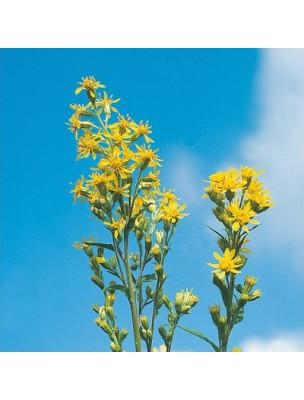 https://www.louis-herboristerie.com/12250-home_default/verge-d-or-bio-teinture-mre-50-ml-biover.jpg