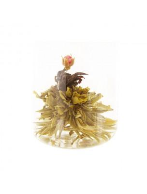 Rosa candida Fleur de thés - Thé blanc, oseille de Guinée, Rose
