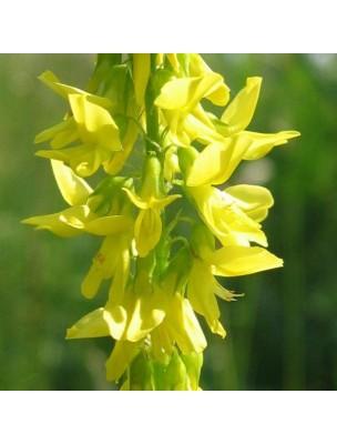 https://www.louis-herboristerie.com/12544-home_default/melilot-jaune-bio-partie-aerienne-coupee-100g-tisane-de-melilotus-officinalis.jpg