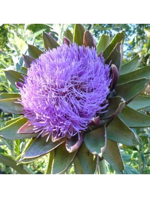 https://www.louis-herboristerie.com/12778-home_default/artichaut-bio-foie-digestion-teinture-mere-cynara-scolymus-50-ml-herbiolys.jpg