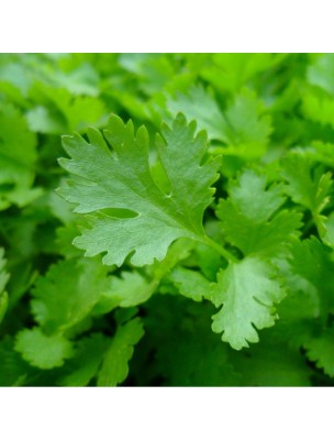 Coriandre feuilles Bio - Digestion & Métaux lourds Teinture-mère Coriandrum sativum 50 ml - Herbiolys