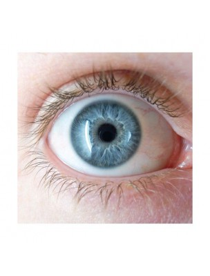 Euphraise Bio - Vision Teinture-mère Euphrasia officinalis 50 ml - Herbiolys