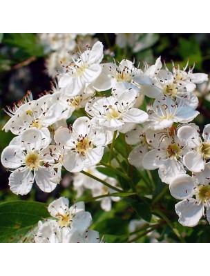 Aubépine Bio - Stress & Coeur Teinture-mère Crataegus monogyna 50 ml - Herbiolys