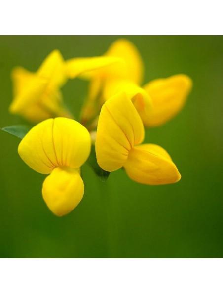 Lotier corniculé Bio - Sommeil Teinture-mère Lotus corniculatus 50 ml - Herbiolys
