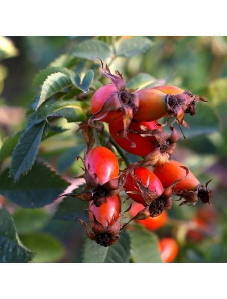 Eglantine Fleur d'églantier Bio - Vitamine C Teinture-mère Rosa canina 50 ml - Herbiolys