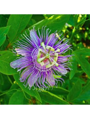 https://www.louis-herboristerie.com/13517-home_default/passiflore-bio-stress-sommeil-teinture-mere-passiflora-incarnata-50-ml-herbiolys.jpg