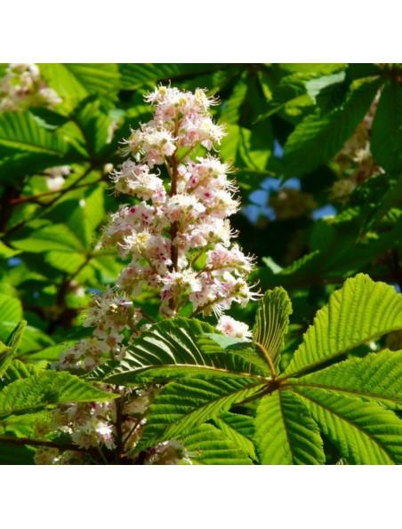 Marronnier d'Inde Bio - Jambes & Hémorroïodes Teinture-mère Aesculus hippocastanum 50 ml - Herbiolys