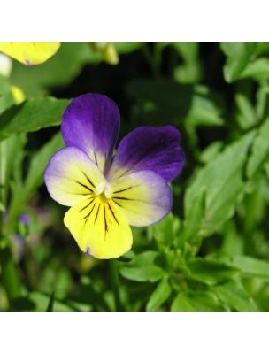 Pensée sauvage Bio - Peau Teinture-mère Viola tricolor 50 ml - Herbiolys
