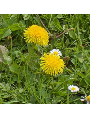 https://www.louis-herboristerie.com/13601-home_default/pissenlit-bio-depuratif-digestion-teinture-mere-taraxacum-officinalis-50-ml-herbiolys.jpg