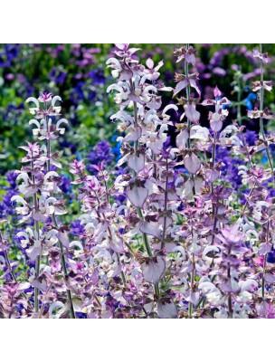 Sauge sclarée Bio - Cycle & Pré-ménopause Teinture-mère Salvia sclarea 50 ml - Herbiolys
