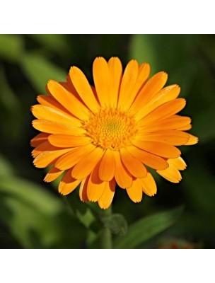 https://www.louis-herboristerie.com/13982-home_default/souci-calendula-bio-peau-muqueuses-teinture-mere-calendula-officinalis-50-ml-herbiolys.jpg