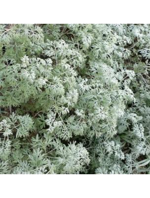 Grande absinthe Bio - Estomac & Vermifuge Teinture-mère Artemisia absinthium 50 ml - Herbiolys